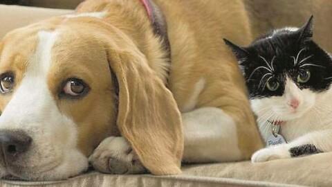 Occhio al diabete nemico di cani e gatti – Gazzetta di Parma