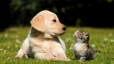 Diabete nei cani e nei gatti, ecco le razze più colpite – Impronta Unika