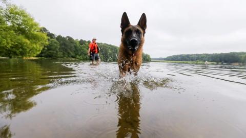 Spunta la tassa sui cani «Si paga se non sterilizzati» – l'Adige – Quotidiano indipendente del Trentino Alto Adige