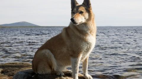 Le vaccinazioni del cane, quali sono obbligatorie e quando servono … – LifeGate