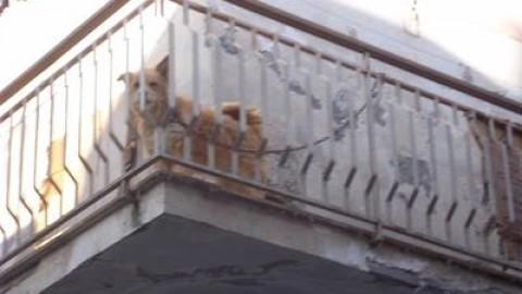Una vita in catena: la tragica storia dei cani di Lentini – L'Urlo