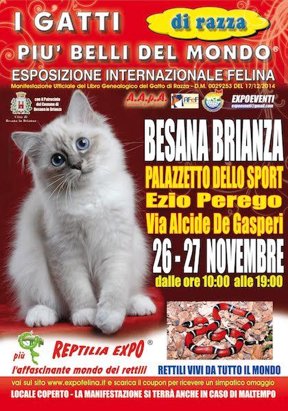 expo-felina-Besana-Brianza-loc-nov-2016
