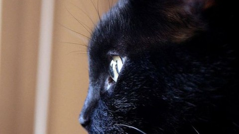 AIDAA: i gatti neri vivono bene a Milano, Roma, Aosta e Bolzano – Meteo Web