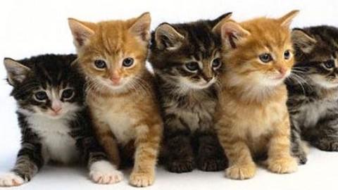 SuperCat Show: Sisma e Scossa, i 2 gatti terremotati, saranno le … – Meteo Web