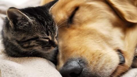 Diabete in cani e gatti: attenzione ai campanelli d'allarme – Ok Salute e Benessere