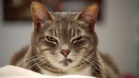 Le 5 cose che rendono il gatto l'animale più amato-odiato dall'uomo – PontileNews