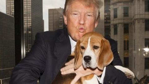 'Presidential Pet'. Arriva Trump: cane o gatto alla Casa Bianca? – Rai News