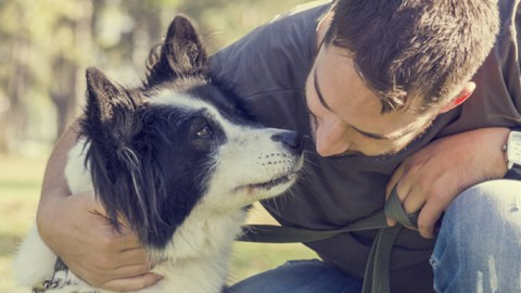 Un corso formativo per proprietari di cani: per conoscerli e gestirli … – Ravennanotizie.it