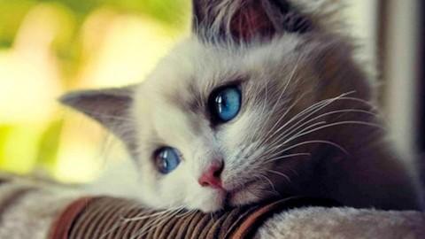 Catturava i gatti con le tagliole e li eviscerava, a processo lo zio … – RiminiToday