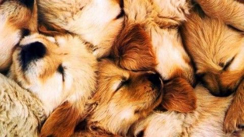 I periodi sensibili del cane: da quello prenatale al giovanile – Riviera24.it