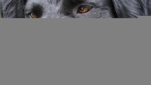 Salerno, anziano sbranato dai suoi due cani L'uomo è morto per … – Si24 – Il vostro sito quotidiano