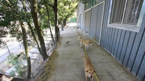 Canile Millemusi senza soldi da 9 mesi: 400 cani rischiano di morire … – Tempo Stretto