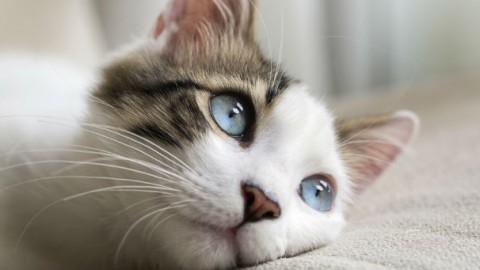 Gatto rasta perde un chilo dopo la rasatura – GreenStyle