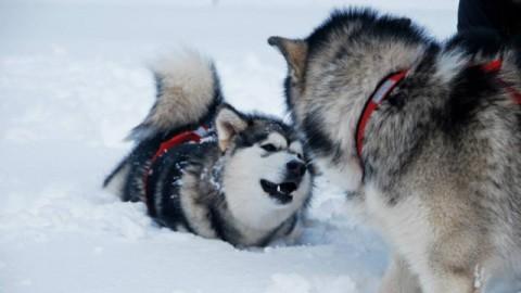 """Perché si dice: """"Fa un freddo cane""""? – Petpassion.tv"""