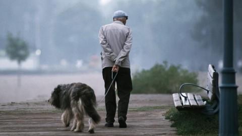Il 39% degli anziani ha un animale domestico e ogni anno spende … – Il Sole 24 Ore