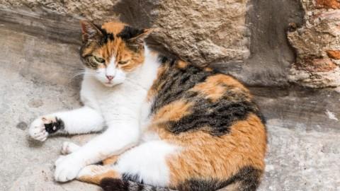 [ 2 dicembre 2016 ] L'Australia in guerra contro i gatti Animali e … – Gazzella della Sera (Satira) (Blog)