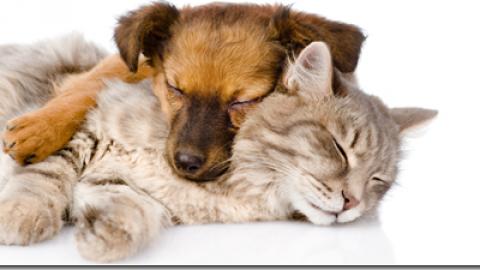 Omeopatia nel cane e nel gatto