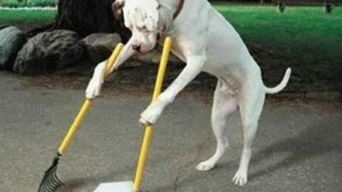 Cacca dei cani Monza il problema – Nuova Brianza