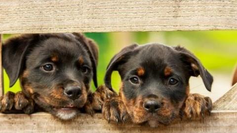Cani e gatti: guida alla sopravvivenza dai botti di capodanno – Blasting News