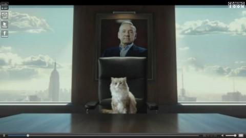 Una vita da gatto, dal 7 dicembre al cinema 'Mister Pelosone', trailer … – Blasting News