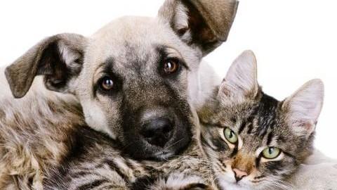 Cani e gatti per allungare la vita: ecco l'elisir di 'eterna giovinezza' – Blasting News