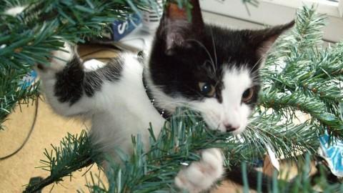 Epic fail compilation: gatti vs l'albero di Natale – Downloadblog.it (Blog)