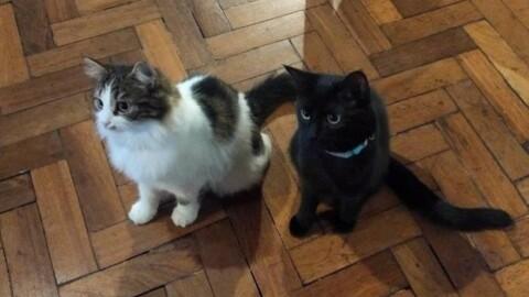Azienda adotta due gatti per sensibilizzare i dipendenti e … – 105.net