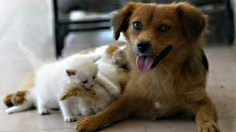 Ansia, anche cani e gatti ce l'hanno. E si curano con i fiori. I consigli – Affaritaliani.it