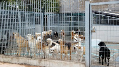 Home Animali Vita da cani. 480 euro a cane per svuotare il canile di… – redazione (Comunicati Stampa)