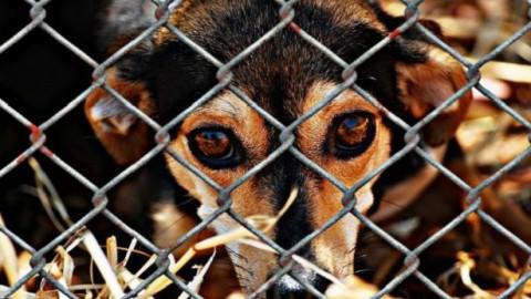 Giornata Internazionale Diritti degli animali – IdeeGreen (Blog)