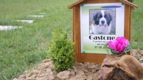 Morte di un animale domestico: quali pratiche burocratiche sono … – Investire Oggi
