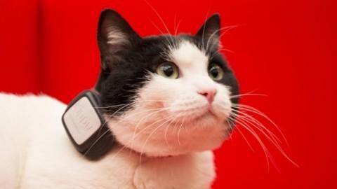 Vodafone Kippy: il GPS per cani e gatti, ma quanto costa? – Investire Oggi