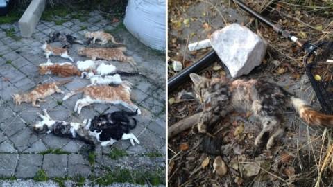"""Colonia di gatti sterminata, un solo sopravvissuto: """"Li hanno … – Leggo.it"""