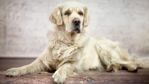 La digestione nel cane, le differenze con l'uomo per una corretta … – LifeGate