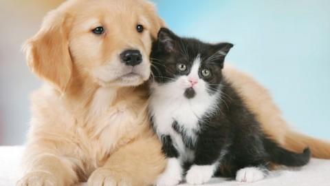 """Natale, Brambilla: """"non comprare ma adottare cani e gatti"""" – Meteo Web"""