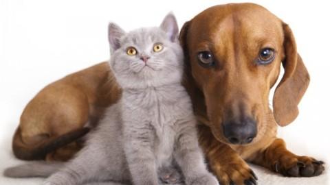 Natale sicuro per cani e gatti: ecco i consigli ed i cibi da evitare – Meteo Web