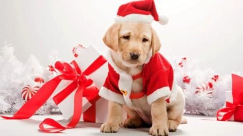 Regalo di Natale: in Italia 22.000 cuccioli di cane e gatto regalati … – Meteo Web
