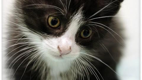 Cani e gatti: I nostri amici a quattro zampe e le loro…capacità! (Parte … – Valledaostaglocal.it