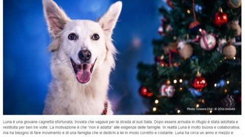 Milano, il calendario con le storie di cani e gatti che cercano famiglia – La Repubblica