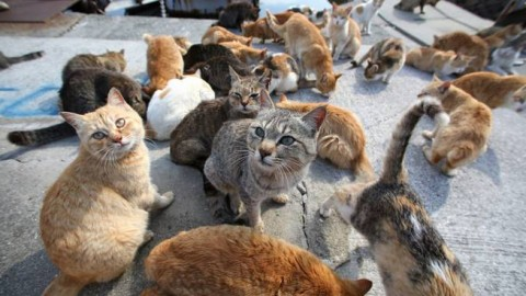 Ceriana, gatti avvelenati in un parcheggio: almeno quattro in gravi … – Riviera24.it