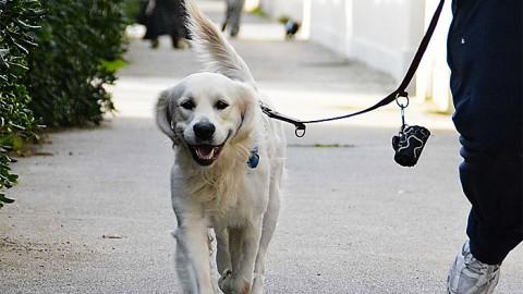 Il cane, il miglior amico dell'uomo, è tra i regali più richiesti a Natale – Torino Oggi