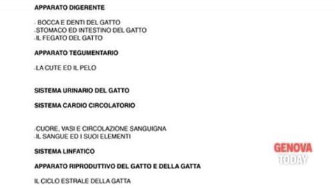 Corso di management e primo soccorso del gatto – GenovaToday