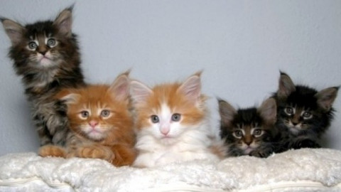 Animali: 7 milioni e mezzo di gatti aspettano una legge. La proposta … – Firenze Post