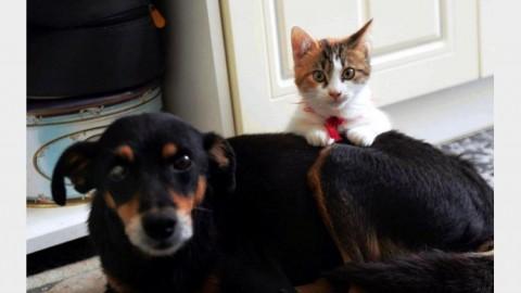 Un cane o un gatto in una casa su 3, la metà preso al canile – Tiscali.it