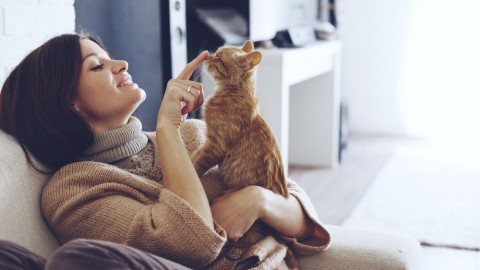 Quanto costa assicurare il cane o il gatto – Soldiweb
