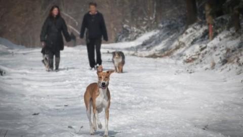 Cani e gatti: in caso di divorzio, in Alaska il giudice li considera … – Blasting News