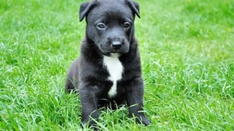 Animali domestici, detrazioni fiscali e 'bonus cane': i comuni pugliesi … – Blasting News
