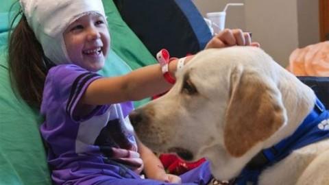 La pet therapy negli ospedali in Lombardia – Blasting News
