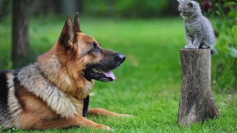 È possibile nominare come erede nel testamento il proprio cane o … – Velvet Pets Italia (Blog)
