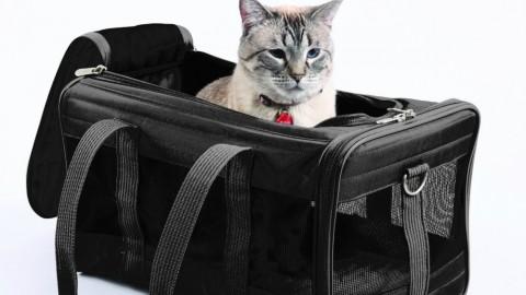 Gatti: come abituarli a stare nel trasportino | Velvet Pets Italia – Velvet Pets Italia (Blog)